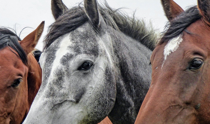Image for Case Study: IoT Solution for Equine Welfare and Performance