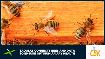 Image for Case Study: Taoglas connects bees and data to ensure optimum apiary health